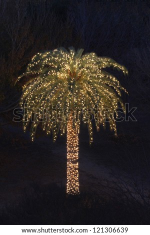 Solitary Palm Tree Decorated with Festive Lights - stock photo