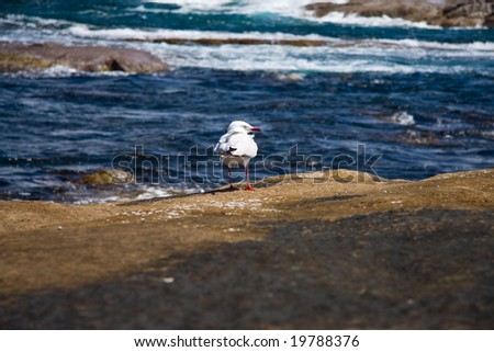 Solitary seagull - stock photo
