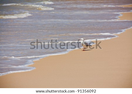 Solitary Seagull. Gull looking out  to sea. Space for copy. - stock photo