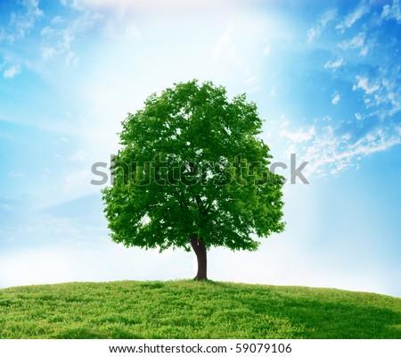 solitary tree - stock photo