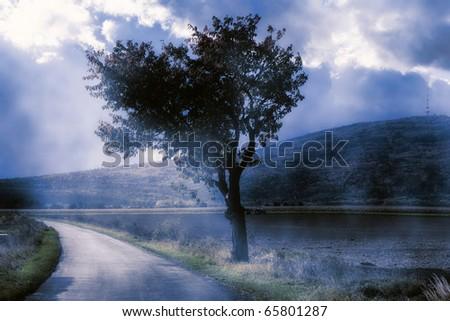 Solitary tree at daybreak - stock photo