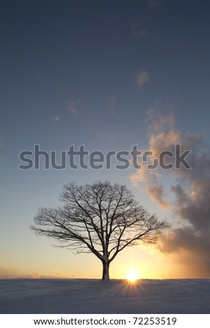 Solitary Tree at sunset - stock photo