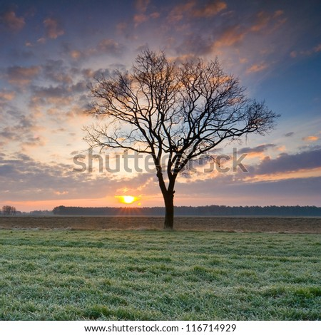 solitary tree in golden sunrise - stock photo