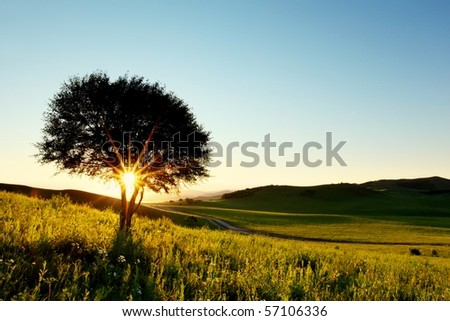 Solitary tree in golden sunset with copy space. - stock photo