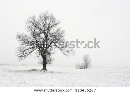 solitary tree in snowy landscape