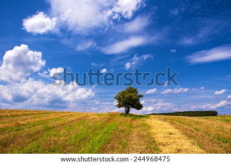 Solitary tree in the summer field - stock photo