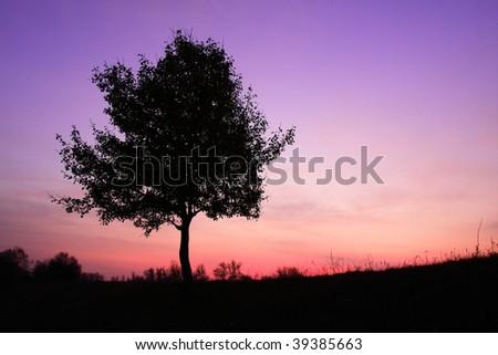 solitary tree in violet sunrise - stock photo