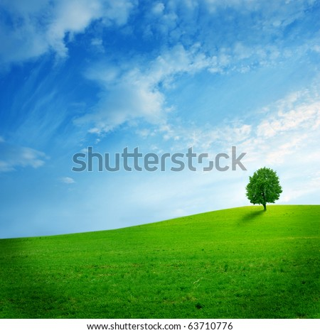 Solitary tree  on the green field - stock photo