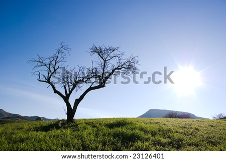 Solitary tree without leaves isolated in backlight