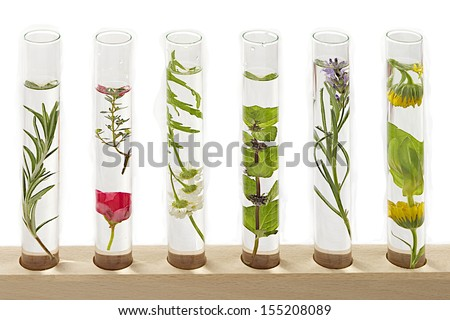 solution of medicinal plants and flowers - Decorative Objects- - stock photo