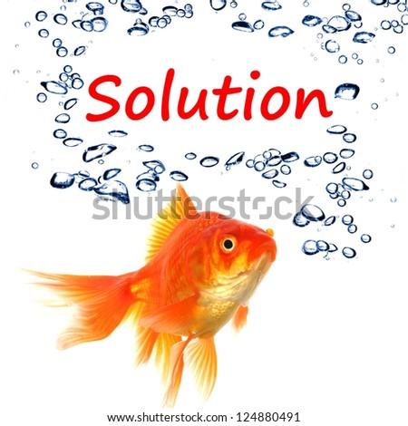 solution word and goldfish showing business problem or success concept
