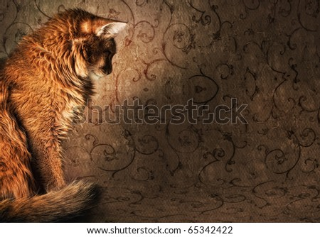 Somali cat on vintage wallpapers - stock photo