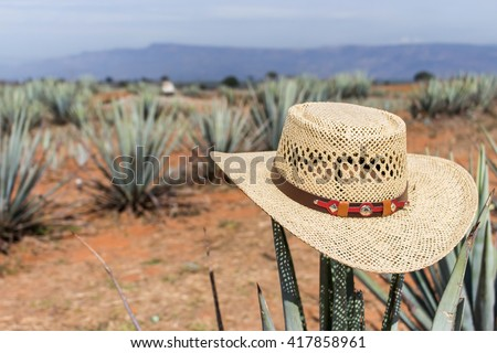 Sombrero on agave. Hat on a cactus.Mexican sombrero on agave. Hat. Sombrero.  Hat on agave. Sombrero on a cactus. - stock photo