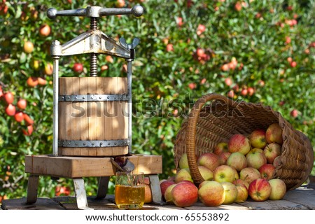 Some Apple gets pressed to a fresh Apple Juice. Some Apple Trees are behind it. - stock photo