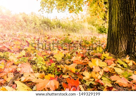 some autumn leaves around a tree in autumn