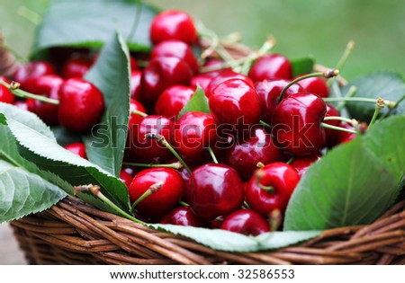 Some beautiful sweet cherry fruit in basket - stock photo