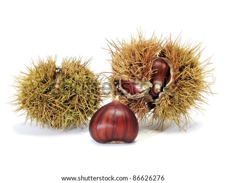 some chestnuts in its shell on a white background