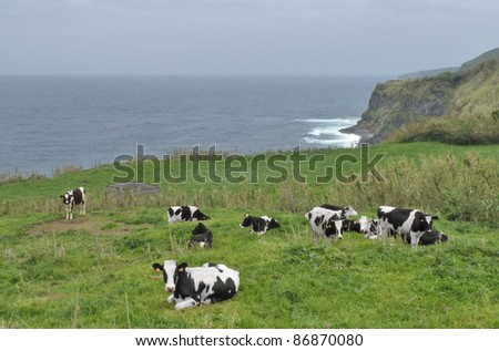 some cows in clouded coastal ambiance  seen on the Azores Archipelago, wich is a group of vulcanic islands located in the middle of the North Atlantic Ocean