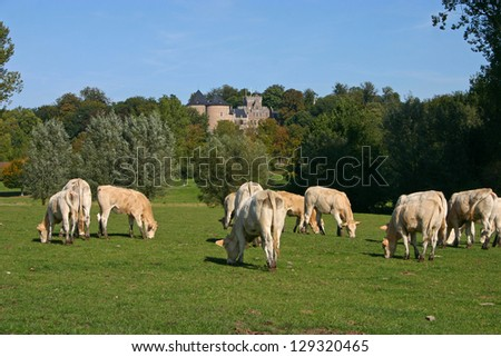 Some cows in the meadow before the castle of Gaasbeek - stock photo