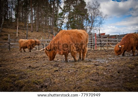 Some cows on a field - stock photo