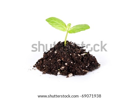 some dirt and green plant on it - stock photo