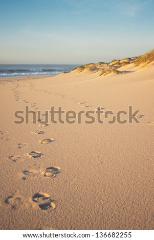 Some dunes, vegetation and footprints on a beach. Taken during sunset, the sand has a golden tone to it.