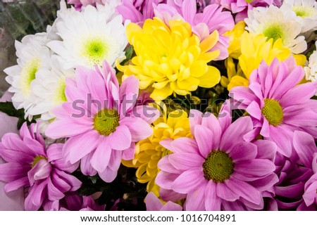 Some flowers of chrysanthemum