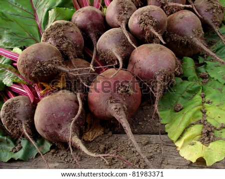 some fresh beetroots with tops - stock photo