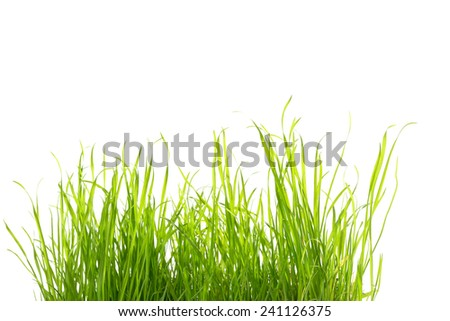 some grass isolated on white - stock photo