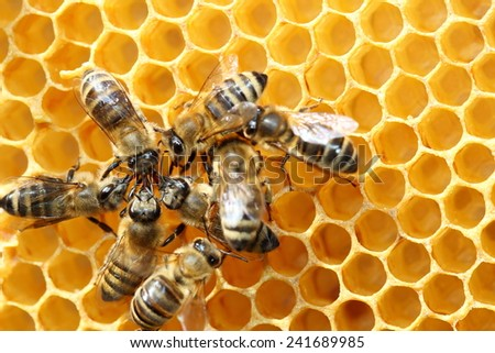 some honey bees are working in team - stock photo