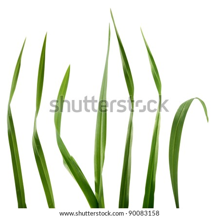 Some isolated green blades of the grass - stock photo