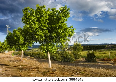 Some lemon trees in a colourful cloudscape. - stock photo