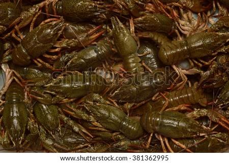Some live crayfish. - stock photo
