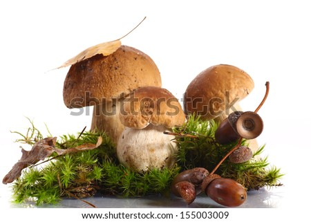 some mushrooms in the moss on a white background - stock photo