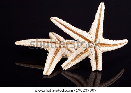 some of sea stars isolated on black background - stock photo