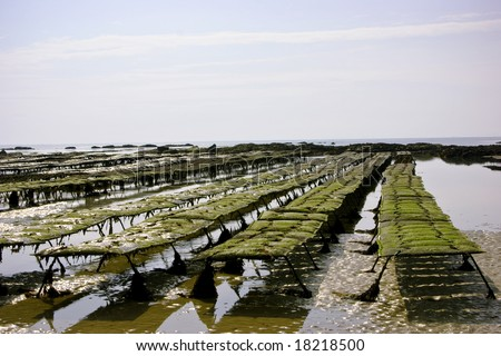 Some oyster beds at the coast in Portbail, France