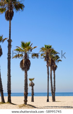 Some palm threes on the beach with nice blue background - stock photo