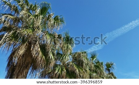 Some palms in the blue sky in a sunny spring day