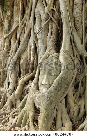 Some part of Buddha Statue in Root of Tree in Wat Phra Si Rattana Mahathat Temple, Ayutthaya Thailand - stock photo