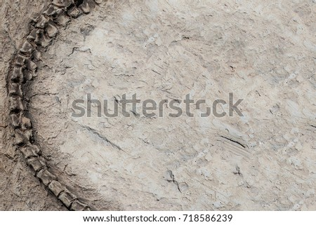 Some parts of artificial Dinosaur fossil background