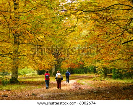 Some people walking in a forest in autumn