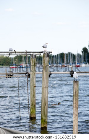 some sea gulls at the harbor sitting on spiles  - stock photo