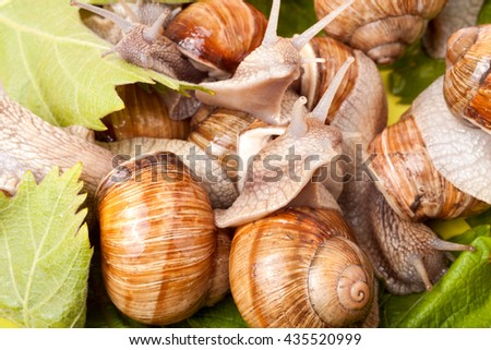 some snails crawling on a white background closeup - stock photo