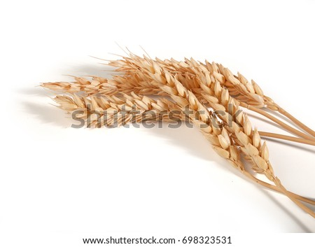 Some spikelets of wheat on the white background