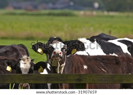 some standing next to the fence - stock photo