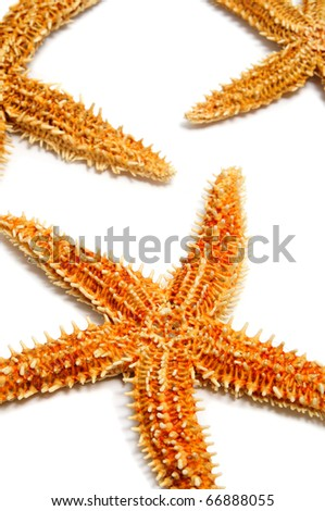 some starfishes isolated on a white background