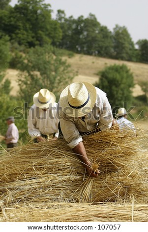 some tradicional agriculture work - stock photo