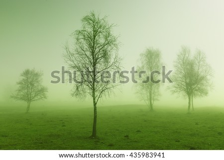 Some trees in mysterious green morning light - stock photo
