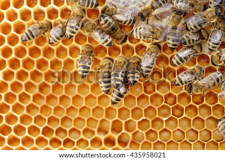 some working bees in a bee hive - stock photo
