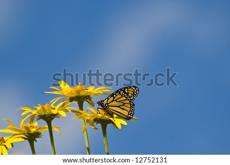 Some yellow flowers and a buttefly with a blue sky background - stock photo